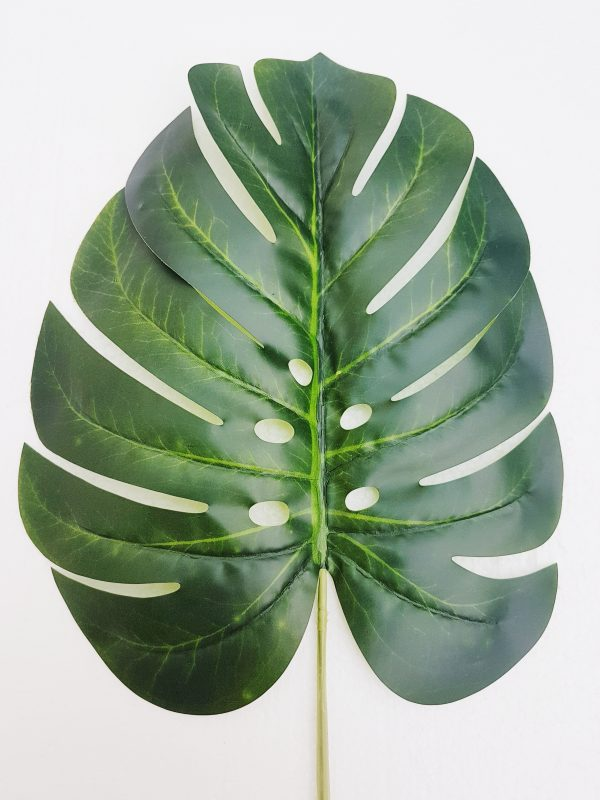 costilla adan monstera mediana